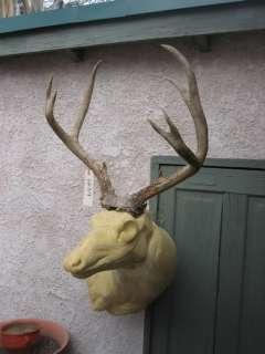HUGE DEEP FORKED MULE DEER RACK antlers whitetail