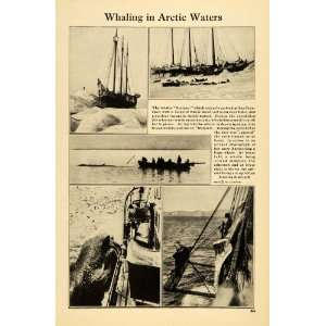 1921 Print Whaling Arctic Waters Herman Cargo Ship Boat