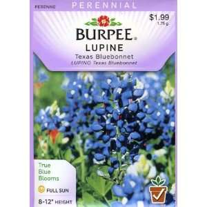 Burpee 32863 Lupine Texas Bluebonnet Seed Packet Patio