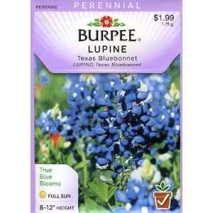 Burpee 32863 Lupine Texas Bluebonnet Seed Packet Patio