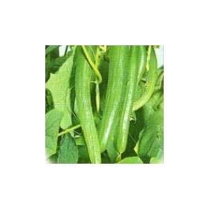 Yamato Extra Long Cucumber Seeds