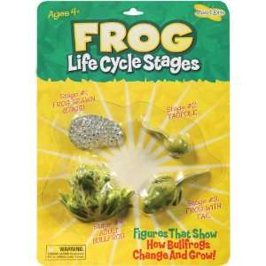 Insect Lore Frog Life Cycle Stages: Toys & Games